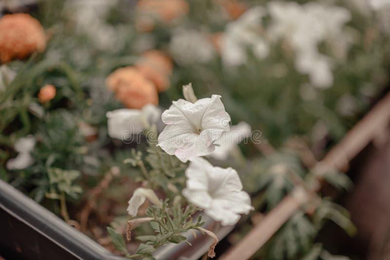 Inlagd ställning för blomma två på fönsterbrädan royaltyfri fotografi