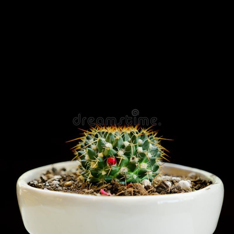 Inlagd växt för kaktus - stilfull naturlig dekor arkivbild