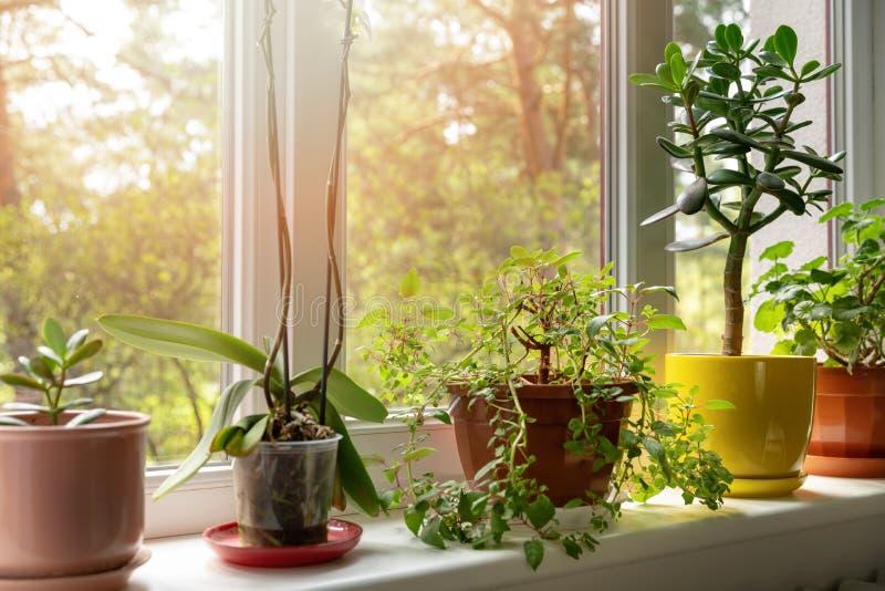 inlagda inomhus växter på solig fönsterbräda arkivbilder