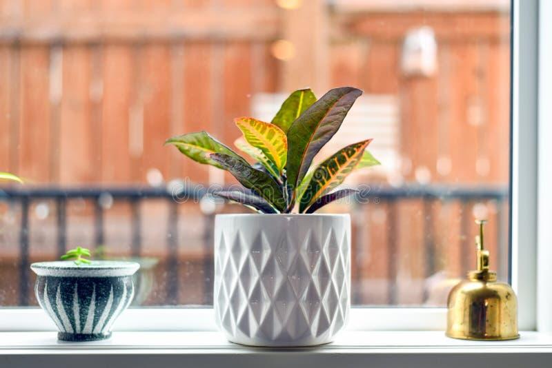Inlagda växter och mister på fönsterfönsterbräda fotografering för bildbyråer