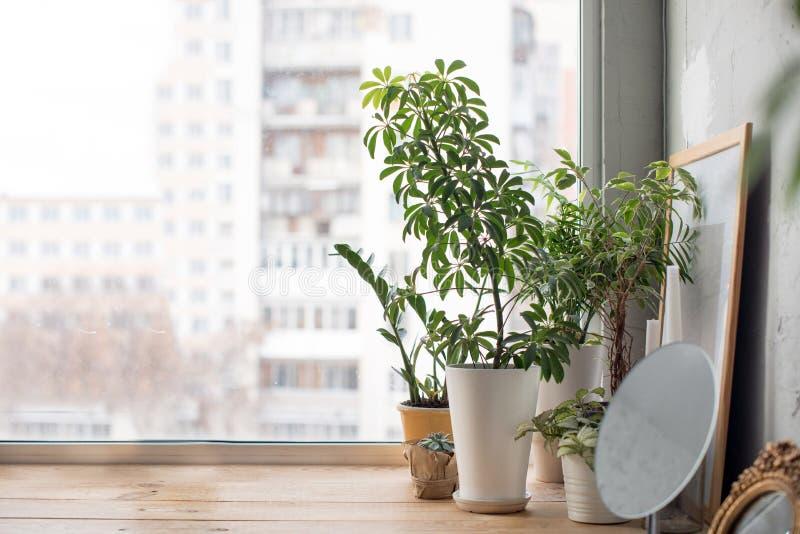Inlagda växter på fönsterfönsterbräda royaltyfri fotografi