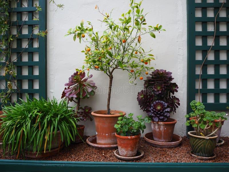 Inlagda växter som växer i en drivhus mot en vit vägg arkivbilder