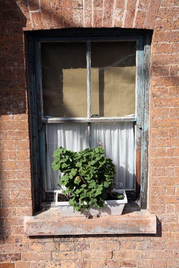 inlagt fönster för växt arkivbild