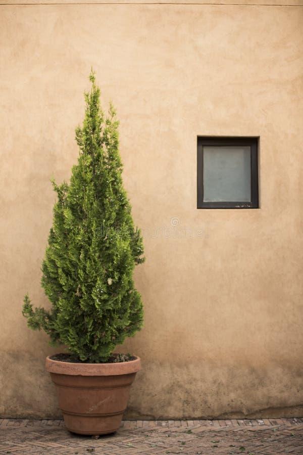 Inlagt träd vid fönstret royaltyfri bild