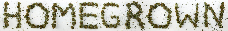 Inlands Gespeld met Marihuana stock afbeeldingen