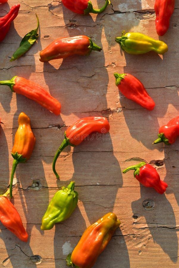 Inlands rood, sinaasappel, en het groene kleine hete kruidige plantaardige ingrediënt van de Spaanse peperpeper voor het koken royalty-vrije stock afbeelding