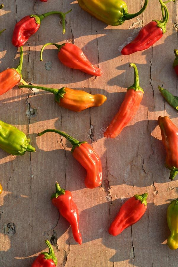 Inlands rood, sinaasappel, en het groene kleine hete kruidige plantaardige ingrediënt van de Spaanse peperpeper voor het koken royalty-vrije stock foto's