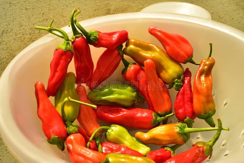 Inlands rood, sinaasappel, en het groene kleine hete kruidige plantaardige ingrediënt van de Spaanse peperpeper voor het koken royalty-vrije stock foto