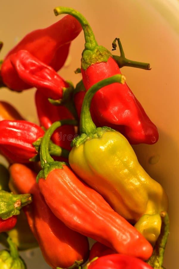 Inlands rood, sinaasappel, en het groene kleine hete kruidige plantaardige ingrediënt van de Spaanse peperpeper voor het koken royalty-vrije stock fotografie