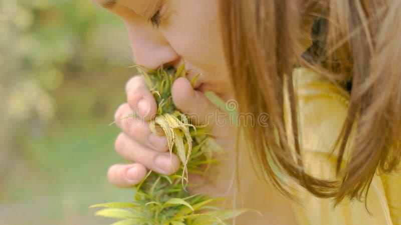 Inlandse Marihuanainstallatie royalty-vrije stock foto