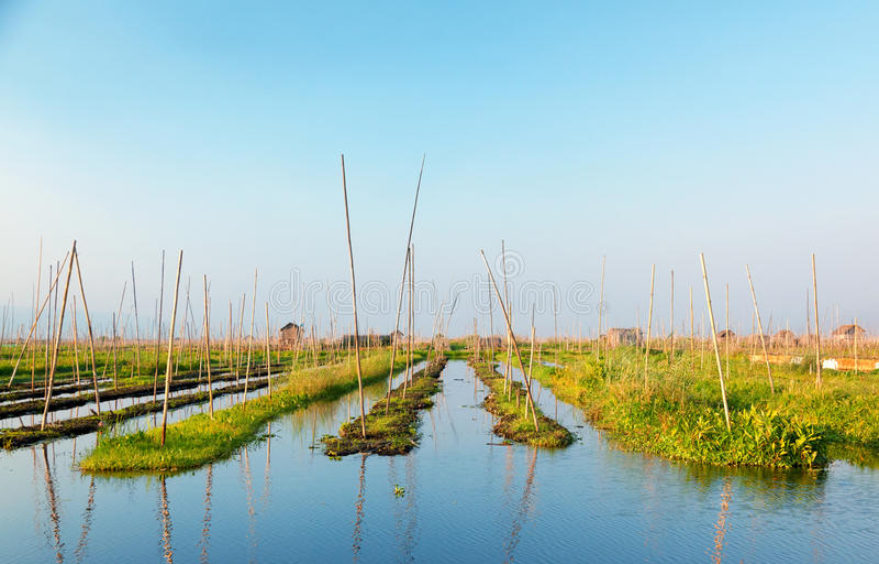 Inle湖的,缅甸浮动庭院 免版税库存图片