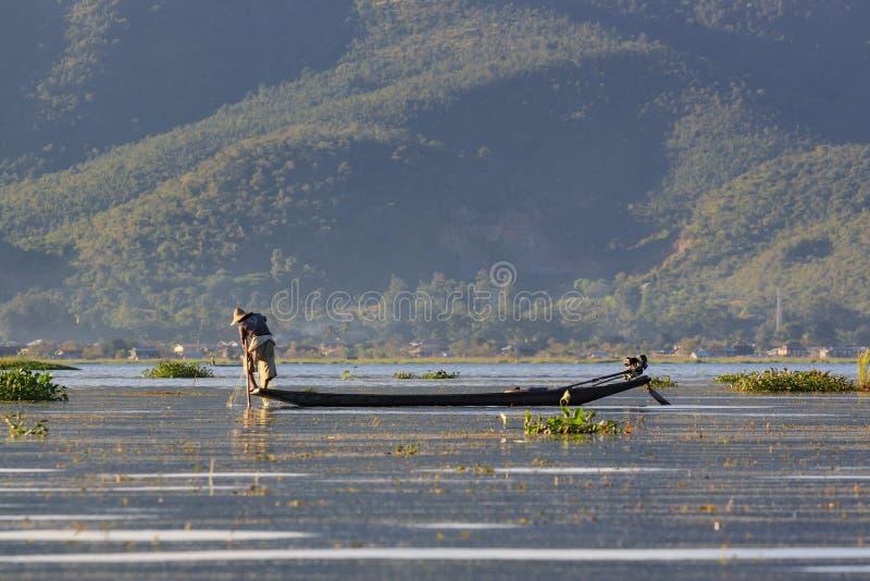 Inle湖,缅甸,2018年11月20日-工作地道的渔夫检查他们的在Inle湖水的网  库存图片