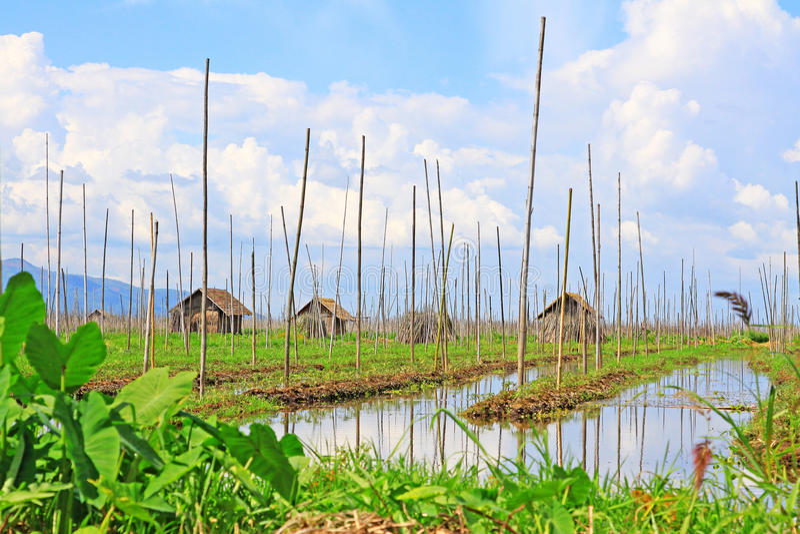 Inle Lake Floating Farm, Myanmar. Inle Lake Floating Farm In Myanmar stock photo