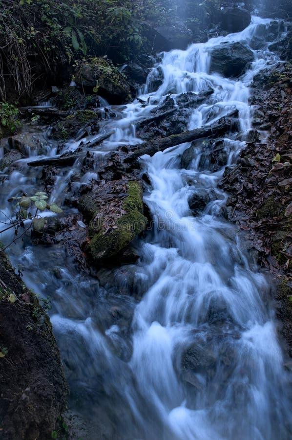 Innaffi attraversare la foresta sopra le rocce coperte muschio allo spri immagini stock