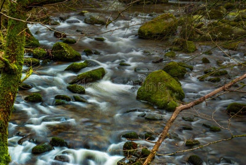 Innaffi il flusso continuo attraverso le rocce in discesa che creano una piccola cascata immagine stock