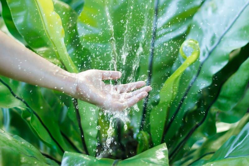 Innaffi il versamento in mano della donna sulla natura, edizione dell'ambiente immagini stock