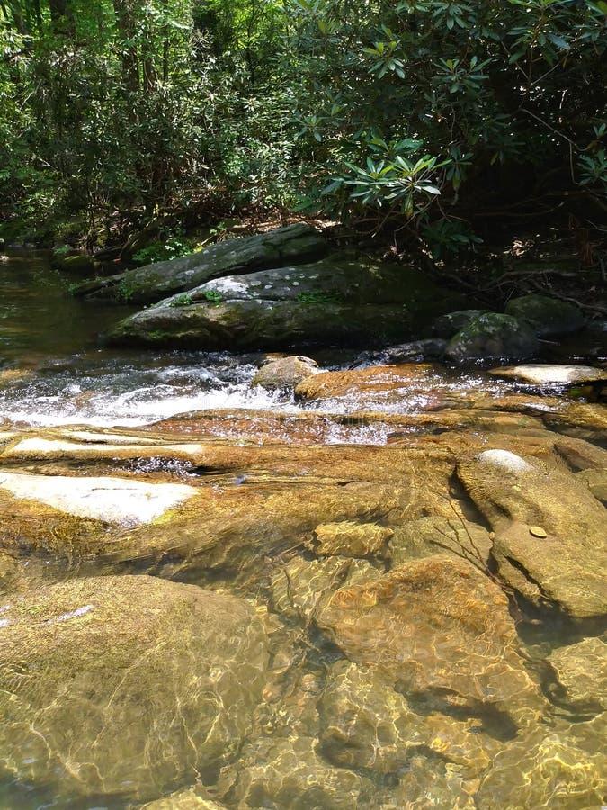 Innaffi lo scorrimento degli alberi delle rocce del pesce della radura della montagna dell'insenatura del fiume fresco fotografia stock