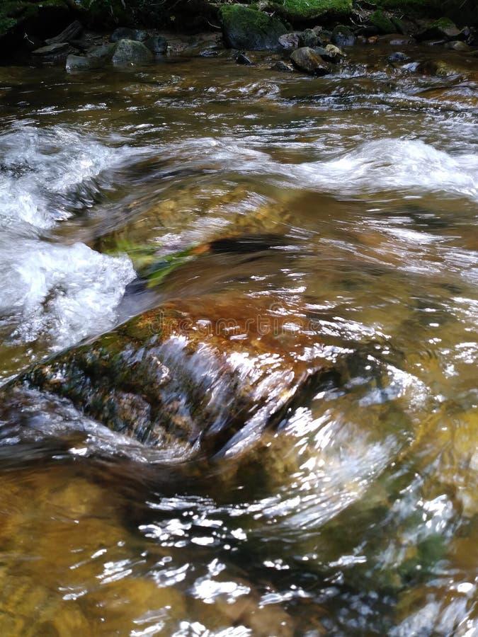 Innaffi lo scorrimento degli alberi delle rocce del pesce della radura della montagna dell'insenatura del fiume fresco fotografie stock
