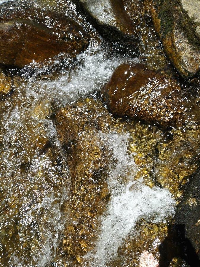 Innaffi lo scorrimento degli alberi delle rocce del pesce della radura della montagna dell'insenatura del fiume fresco fotografie stock libere da diritti