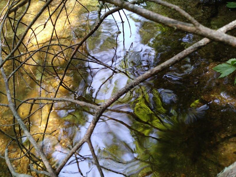 Innaffi lo scorrimento degli alberi delle rocce del pesce della radura della montagna dell'insenatura del fiume fresco immagine stock