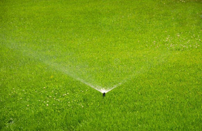 Innaffiando, spruzzatore automatico che lavora all'erba verde immagine stock libera da diritti