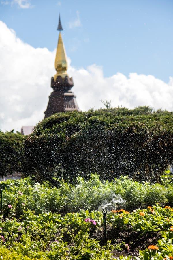Innaffiato con acqua sul giardino immagine stock libera da diritti