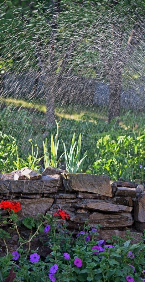 Innaffiatura fotografia stock immagine di piante for Spruzzatori giardino