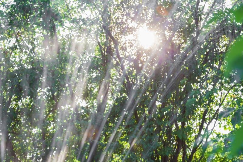 Innaffiatura automatica del giardino fotografia stock libera da diritti