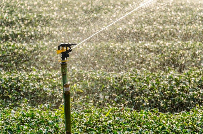 Innaffiatura della testa dell'irrigatore fotografia stock