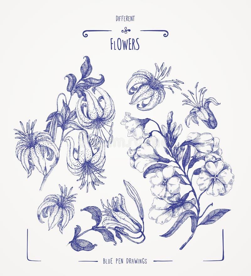 inne kwiaty ilustracji