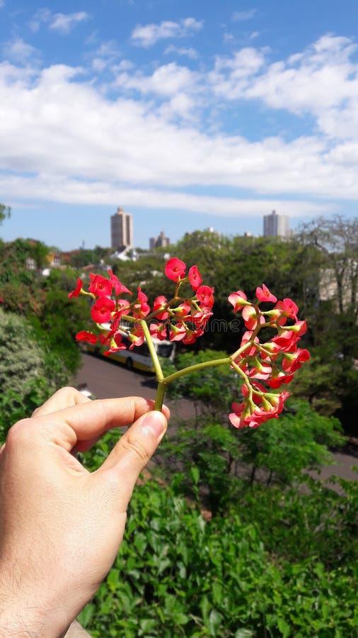 Innehav en röd blomma arkivfoto