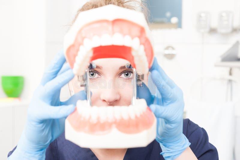 Innehav för närbildkvinnatandläkare och se till och med den plast- käken royaltyfri bild