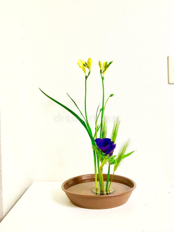 Innenarchitektvorbereitungen Ikebana für Anlagen lizenzfreies stockfoto