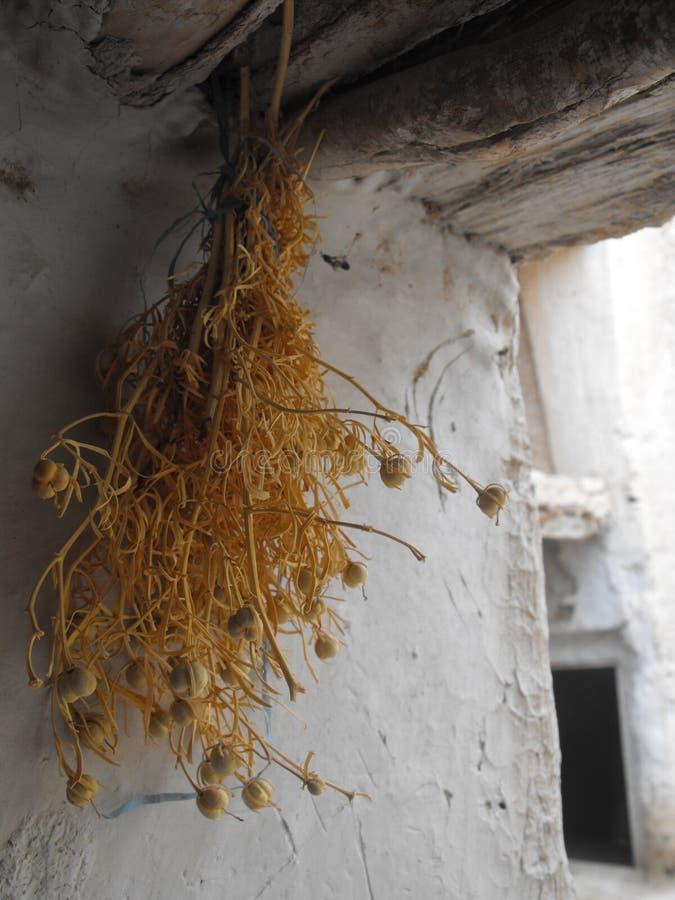 Innendetail Morrocan mit Trockenblumen in Taghjijt-Oase stockfotografie
