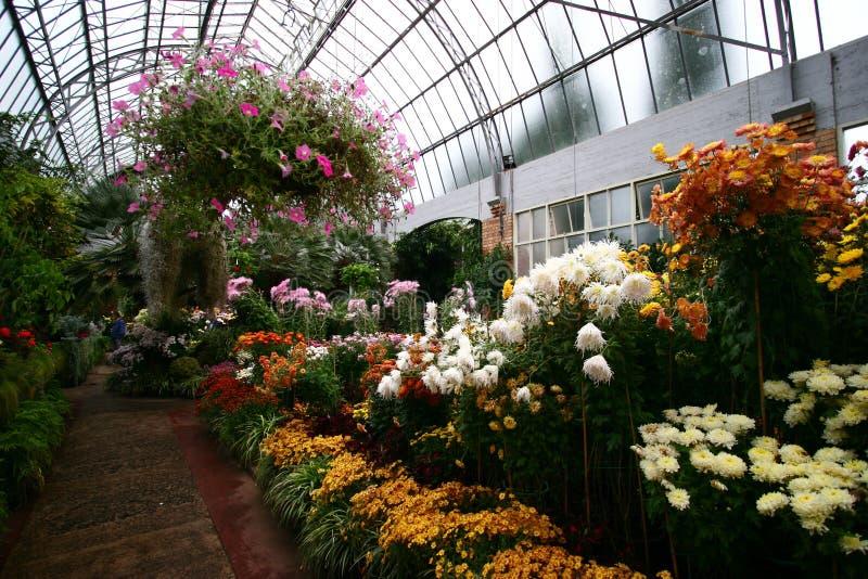 Innenraum Gewächshauses des Fass-des gewölbten viktorianischen Stils mit bunten Blumen stockfoto
