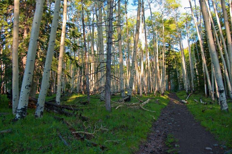 Inner Basin Trail stock photography