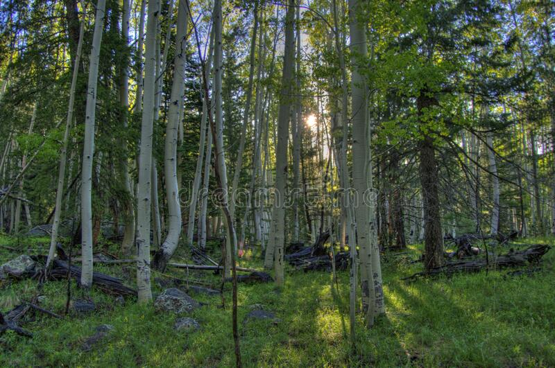 Inner Basin Trail royalty free stock image
