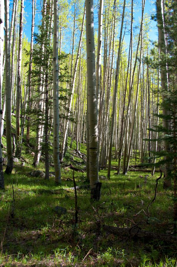 Inner Basin Trail stock image