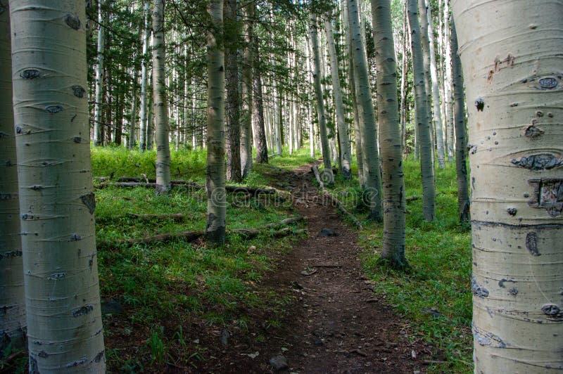 Inner Basin Trail stock photos