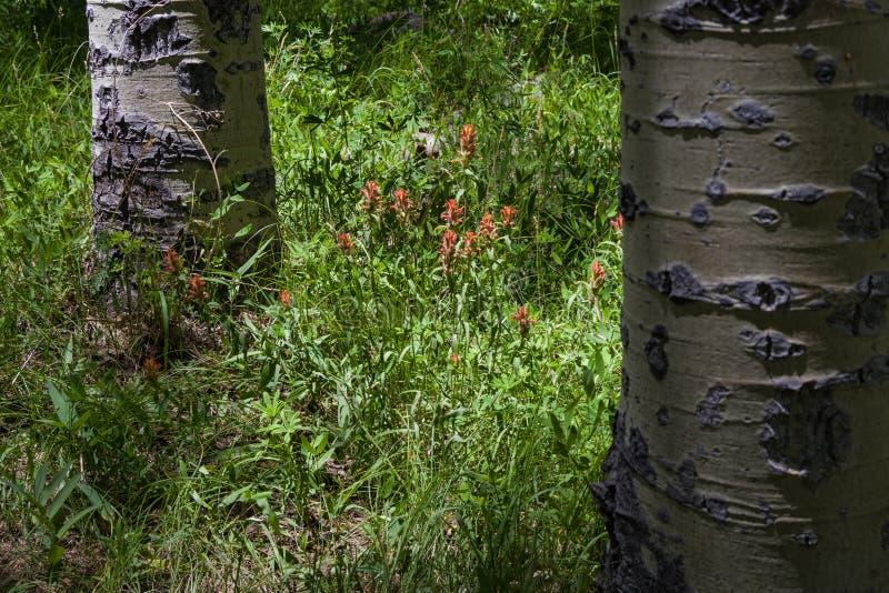 Inner Basin Trail No. 29 royalty free stock photo