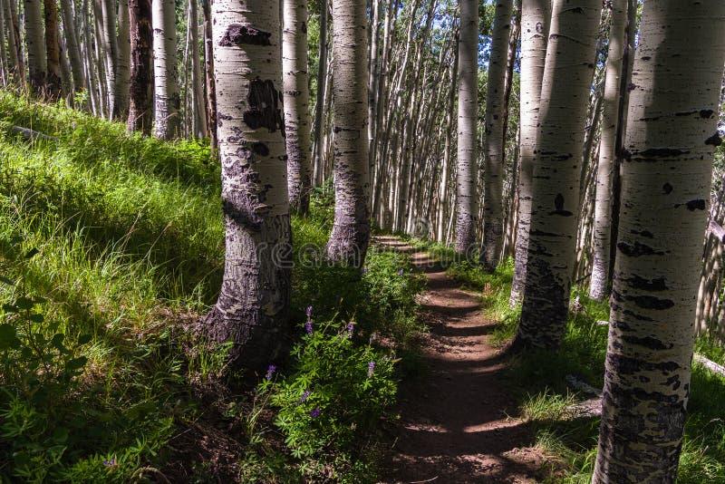 Inner Basin Trail No. 29 stock image