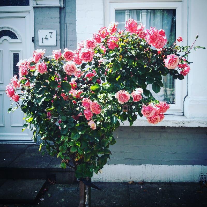 Inner-geformte Rosen stockfoto