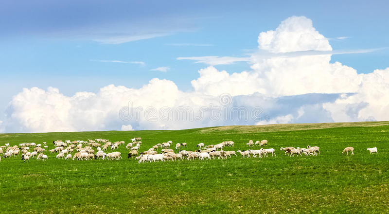 Inner Mongolia grassland. Inner Mongolia prairie, fresh green and picturesque, endless, especially to the north of the Hulun Buir is the center of the royalty free stock images