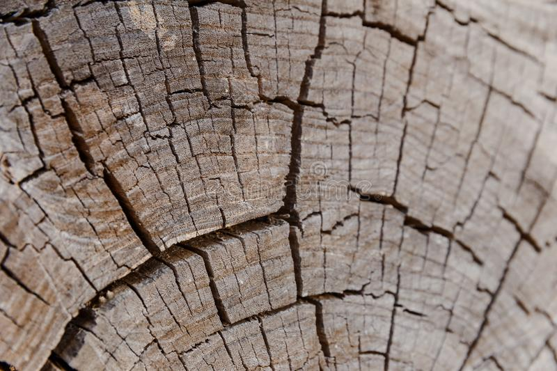 The inner section of a tree. Internal cut of wood, wood texture stock photography