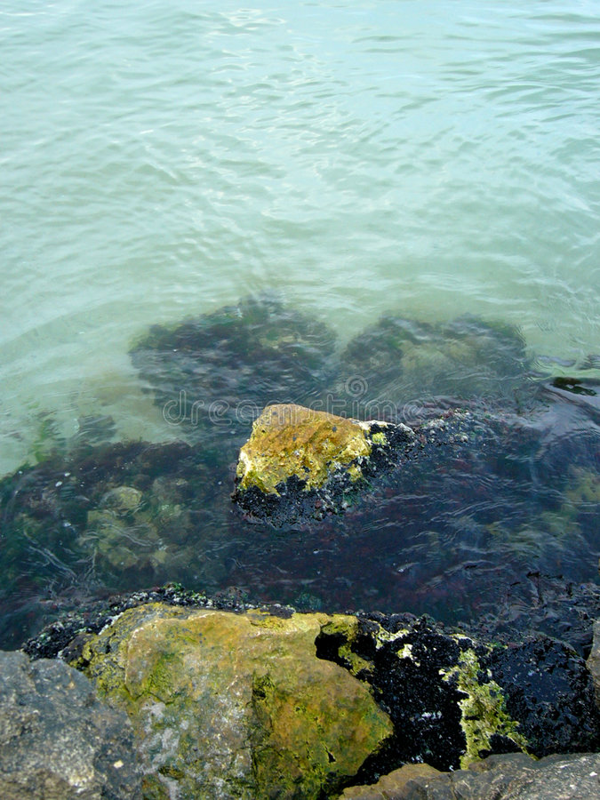 Download Inner silence stock photo. Image of black, alga, christal - 229100