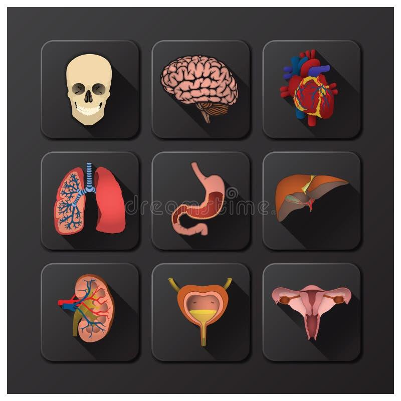 Innere Organe medizinisch und Gesundheits-Ikonen-Satz lizenzfreie abbildung