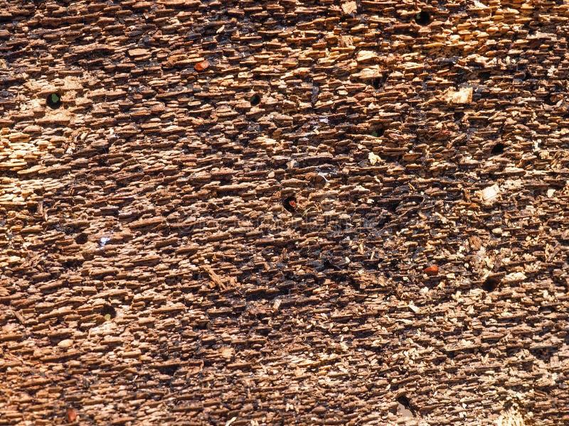 Innere Seite der Baumrinde stockfotos