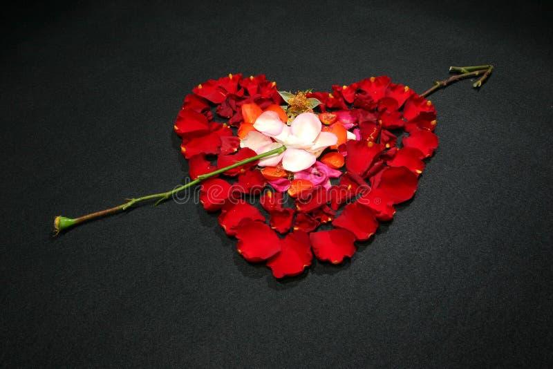 Inneres gebildet durch rosafarbene Blumenblätter stockbild