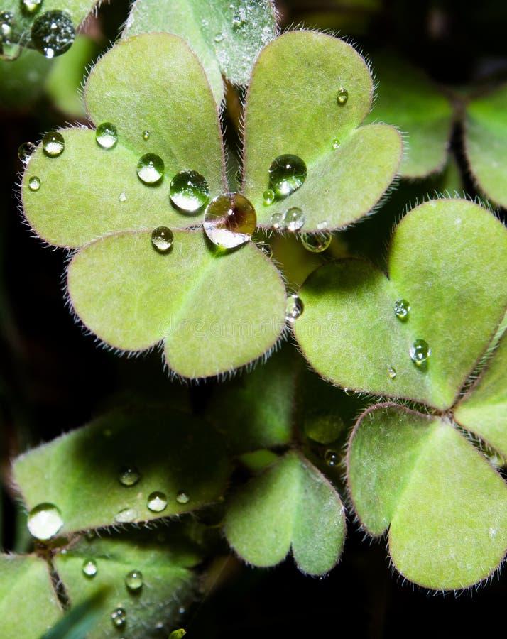 Inneres geformte Blätter mit Wassertropfen lizenzfreie stockbilder