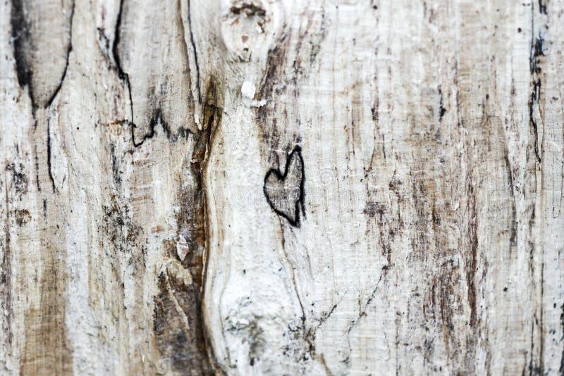 Inneres im Holz Hölzernes textura mit einem natürlich gebildeten Herzen stockfotografie